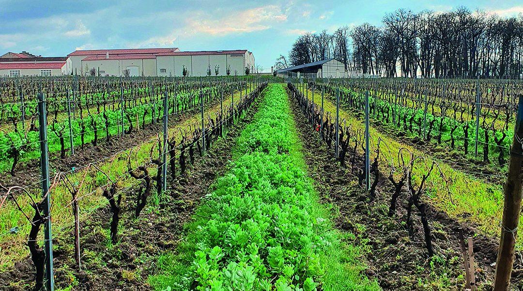 Expérimentation BEE: faciliter l'intégration de solutions de biocontrôle dans les itinéraires des exploitations viticoles