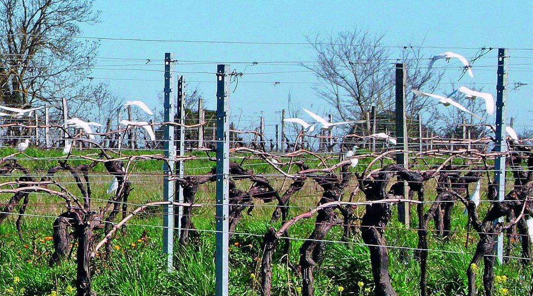 Viti'Lab Pineau des Charentes: «développer l'agro-écologie au service de l'environnement et de la qualité de vie»