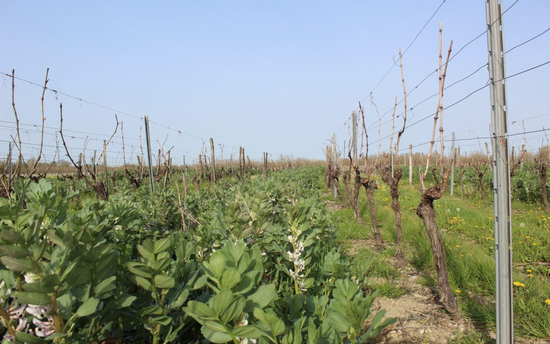 Directive Nitrates : application du nouveau programme d'action régional, les règles des couverts végétaux de cet automne