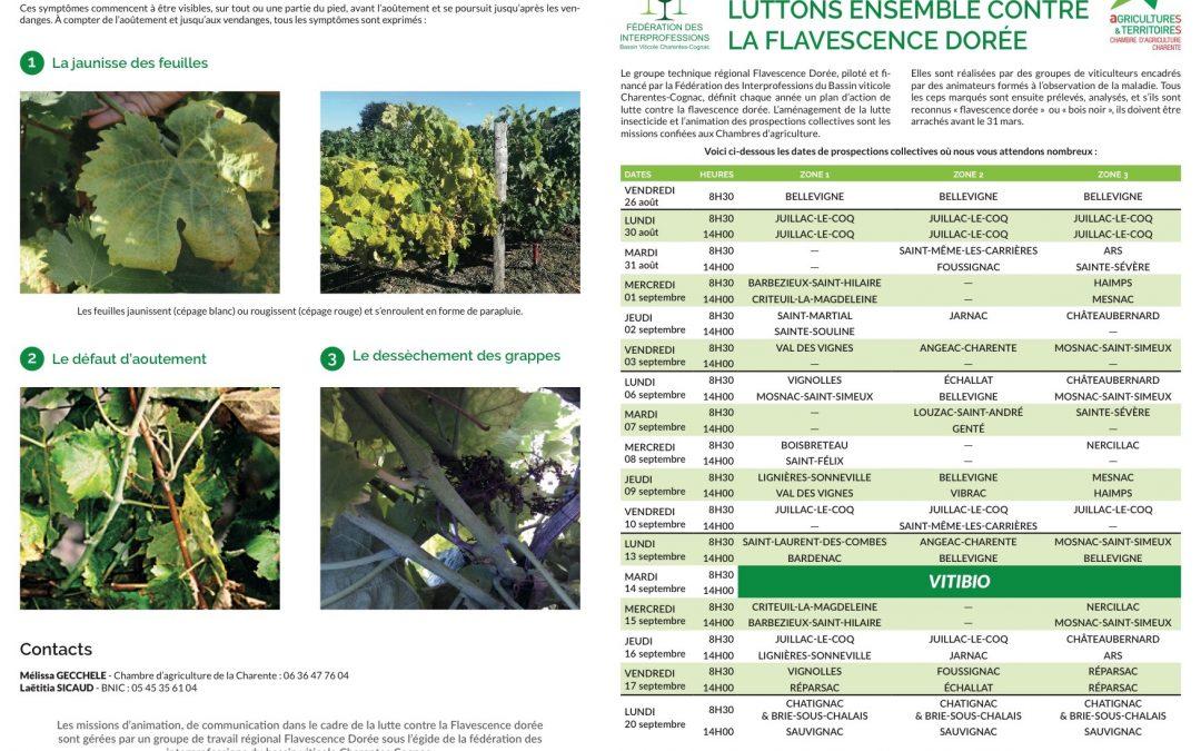 FLAVESCENCE DORÉE : CAMPAGNE DE PROSPECTION EN CHARENTE DU 26 AOÛT AU 20 SEPTEMBRE