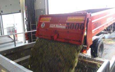 Lundi 11 octobre : ouverture des déclarations de récolte du millésime 2021