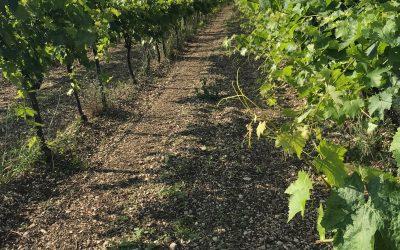 Le mois de la Bio 2021 en Nouvelle-Aquitaine